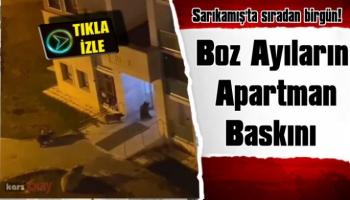 Boz Ayılar Sarıkamış'ta Apartman Bastı!
