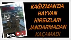 Kağızman'da Hayvan Hırsızları Jandarmadan Kaçamadı