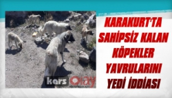 Karakurt'ta Sahipsiz Kalan Köpekler Yavrularını Yedi İddiası