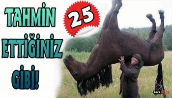 Kars'ta Çalınan 25 At Aranıyor!