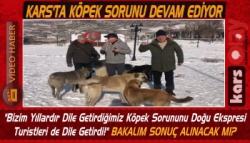 Kars'ta Turistler Sokak Köpekleri İçin Yetkilileri Göreve Davet Etti