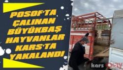 Posof'ta Çalınan Büyükbaş Hayvanlar Kars'ta Yakalandı