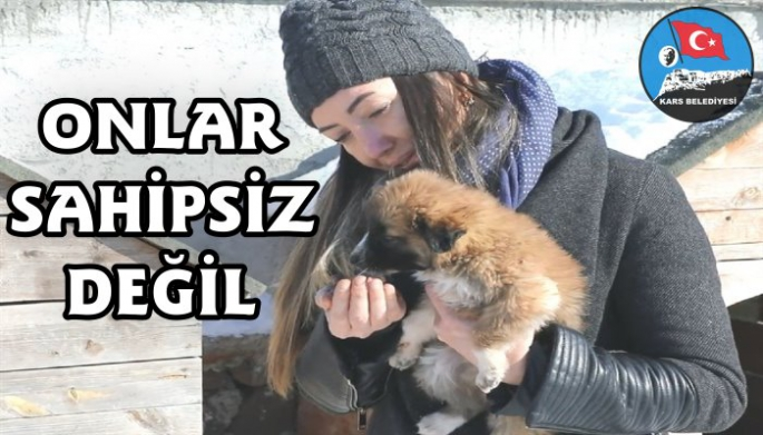 Kars Belediyesi sokak hayvanlarını unutmadı