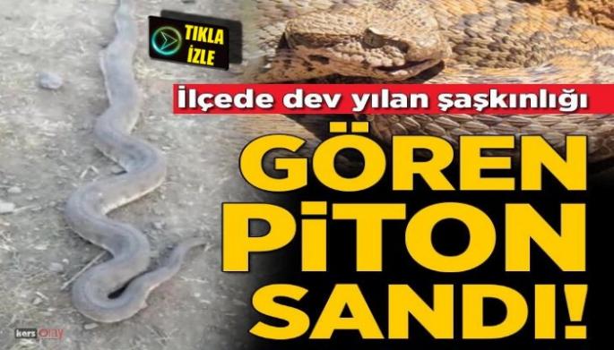 Kars-Kağızman'da piton saldırısı!
