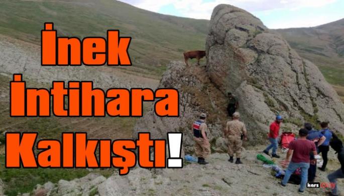 Kayalıklarda Mahsur Kalan İneği Kurtarma Operasyonu!