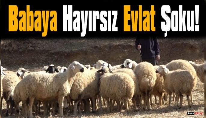Koyunları Çalınan Çiftçiye Evlat Şoku!