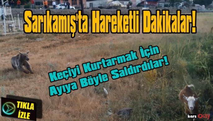 Sarıkamış'ta Keçiyi  Ayı Saldırısından Vatandaşlar Kurtardı!