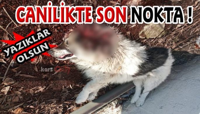 İki sokak köpeği vahşice katledildi!